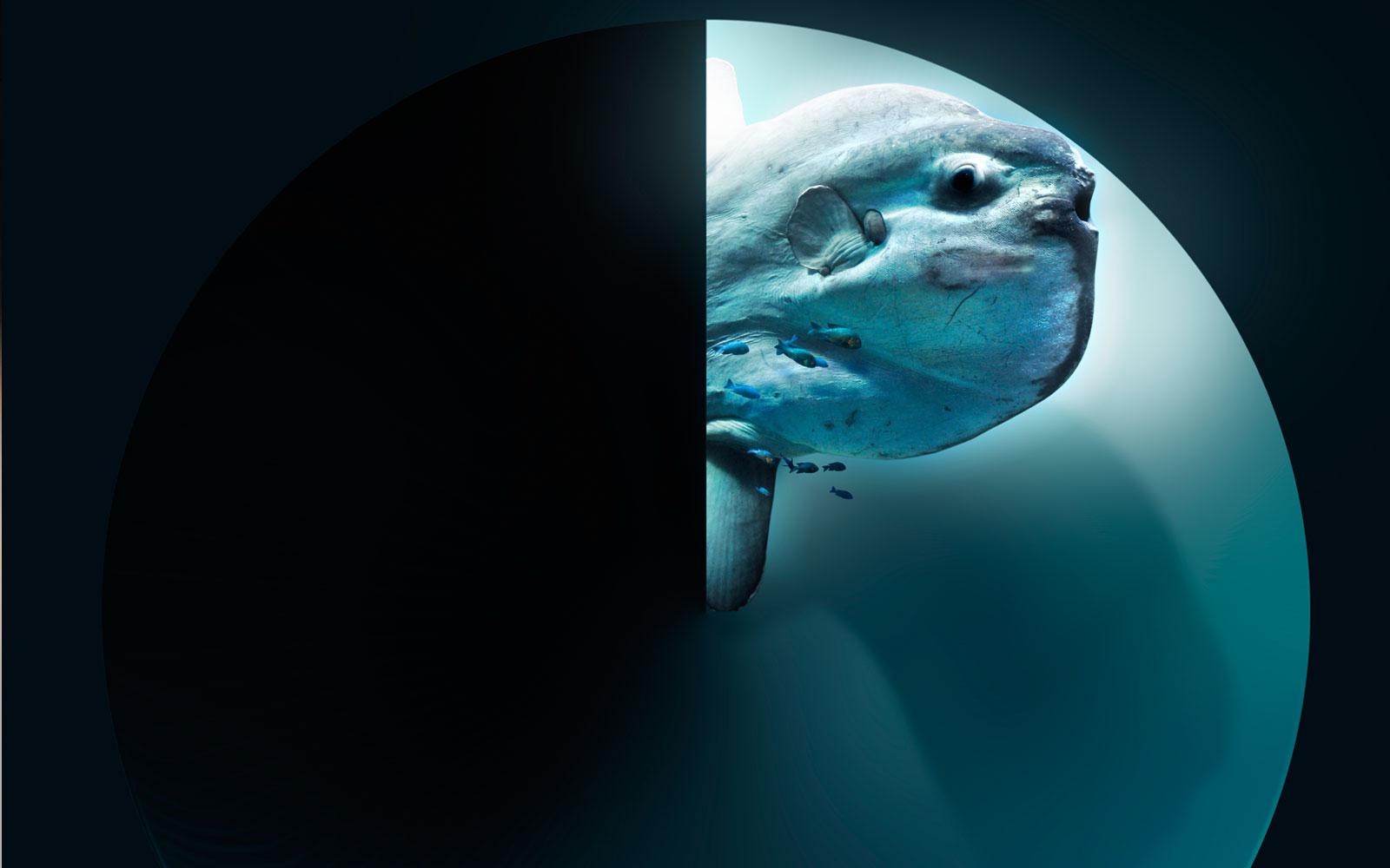 pez-luna