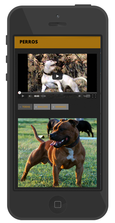 desarrollo web diseño paginas animales